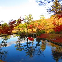 チョコット!奈良公園まで散歩、紅葉が綺麗でしたよ~。^0^/
