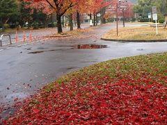 岡山大学構内の紅葉八景(2014年版 位置情報つき)