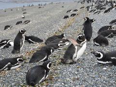 ペンギン村をパトロール&最南端SL『世界の果て号』に乗る!