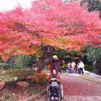 秋色に染まる庭園 松戸 戸定邸☆