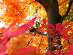 出遅れを一気に取り戻す紅葉狩り ~穴場の足柄エリア・矢倉岳、そして夕日の滝~