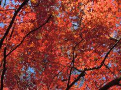 カラフルな代々木公園で90分~お金をかけずに紅葉を楽しむ