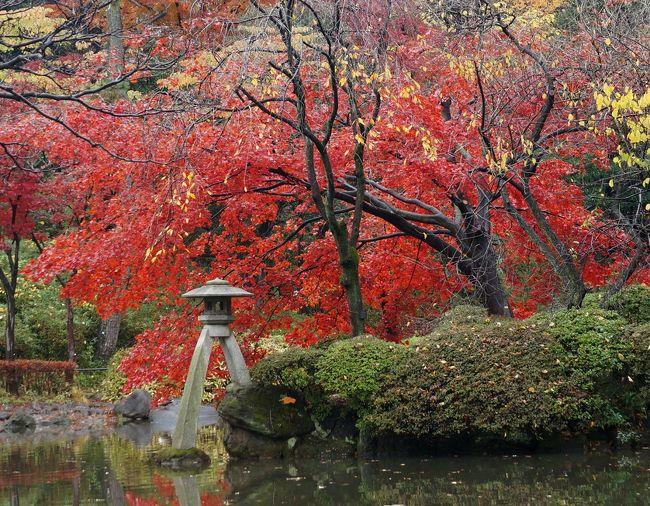 ケガの治療でしばらく静養していたが、東京広尾の病院へ行くため、気になる駅周辺を散歩してみた。<br /><br />広尾散歩通り〜瑞泉山祥雲寺〜有栖川宮記念公園〜広尾コンプレックス<br /><br />一ヶ月半ぶりに、カメラを持って歩いてみた。