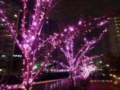 ☆2 目黒川・ピンクのイルミネーション 冬の桜 目黒川みんなのイルミネーション2014