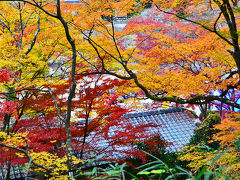 2014紅葉(12)東海一の紅葉...香嵐渓もみじまつり