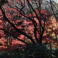 横浜の紅葉 2014 四季の森公園