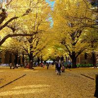 2014 秋 東京大学散歩ー2 本郷キャンパス 上