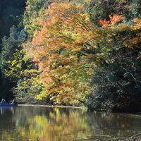 湖面から眺める亀山湖紅葉クルーズ(千葉)