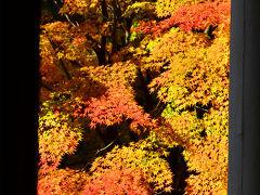 2014紅葉(15) 紅葉を愛でながら博物館明治村散策