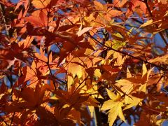秋の散歩日和。紅葉もまだ残っています。瑞泉寺来迎寺(鎌倉三十三観音5,6)