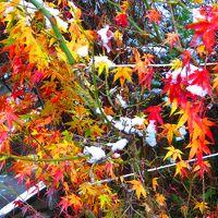 吉野山・小雪が降る中、金峯山寺~如意輪寺を見て周る
