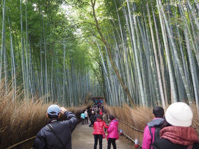 新しいカメラOM−Dの初撮り、天龍寺を出て竹林の道に入ります。<br /><br />このあたりは初めての場所、とりあえず歩いてみます。<br /><br />そこで最初にあったのが大河内山荘、入ってみる事にしました。<br /><br />そして、竹林の道をもどると、野宮神社(ののみやじんじゃ)があり、参拝します。<br /><br />そのあとちょっと散策して、帰途に。<br /><br />【写真は、竹林の道です。】