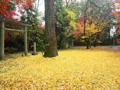 京都を歩く(217)  晩秋の京都 最後は散紅葉で