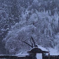 福井 雪の一乗谷城と永平寺