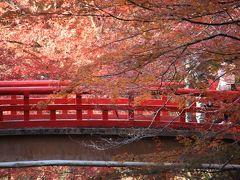2014.11 紅葉!岩屋堂公園!