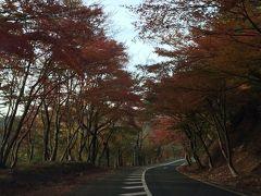 まさに紅葉まっさかり!滋賀・京都女ひとり旅