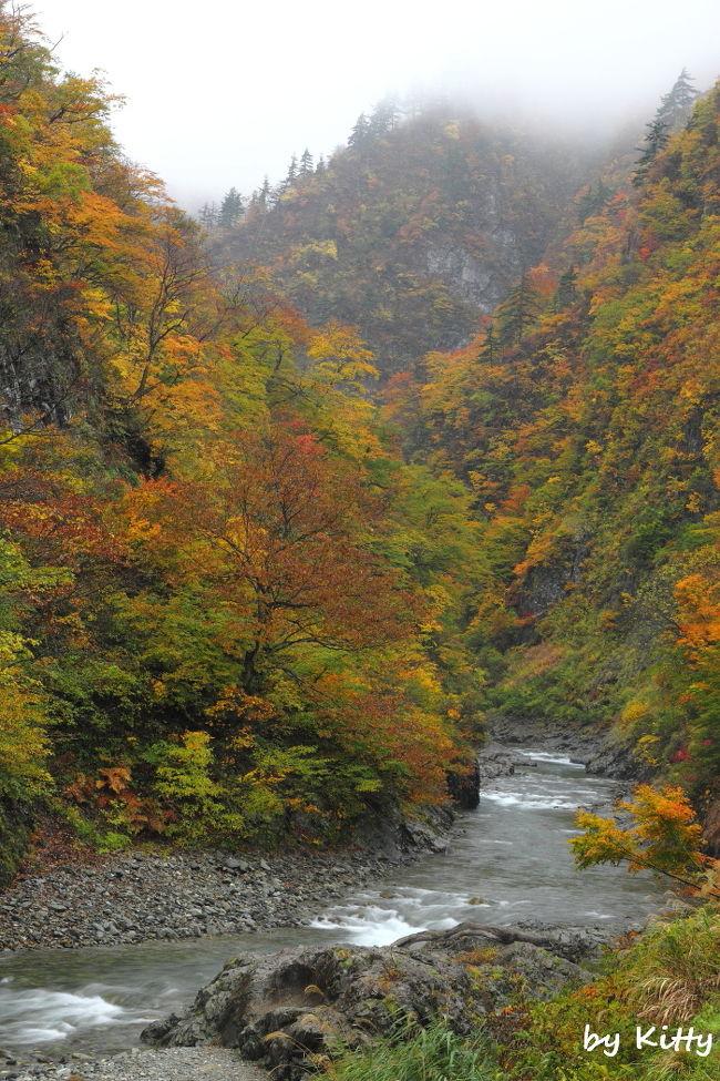 秋川渓谷でバーベキューを楽しんだその日の夜、新潟・越後湯沢へ向けて出発!<br />この日は到着がすでに23時頃だったので寝るだけにして、翌日に苗場のドラゴンドラと清津峡へ行ってみました♪<br /><br />ドラゴンドラの紅葉はすでにちょっと終わりかけだったけれど、清津峡の紅葉がとっても素晴らしい☆<br />そして清津峡へ行くまでの道のりで見かけた山々の紅葉もすごかった〜!!<br />ここの紅葉は今年見た紅葉の中でもBEST紅葉だ☆☆<br />午後からは雨が降ってきてしまったけれど、それもまた幻想的で良し。<br /><br />帰りの高速では一度行ってみたかった寄居の星の王子さまPAにも寄れてかなり満足♪<br />初新潟で、かなり濃ゆ〜い1日を過ごせました。<br /><br />