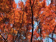 カラフルな国立科学博物館附属自然教育園で110分~お金をかけずに紅葉を楽しむpart1