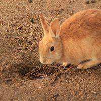 ウサギと毒ガス / 大久野島 / 広島