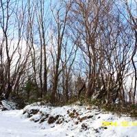 愛媛・冬の旅