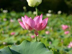 花には無縁な小生が…(長野県上田市2006)