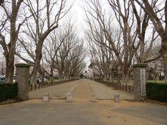成田市散策(7)・・三里塚記念公園(宮内庁下総御料牧場跡)を訪ねて