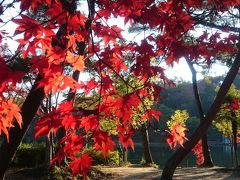 くろんど池の紅葉