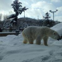 氷点下の旭山動物園に行く