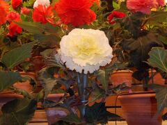 なばなの里。。お花とイルミネーション & LED..ノーベル賞  天野先生の地元で 年末恒例キャバ忘年会と街中..夜風景