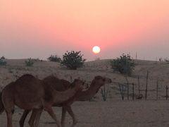 【ドバっとドバイ!」ツアーで行く アブダビとドバイ 6日間⑦】 ナイト砂漠サファリツアー