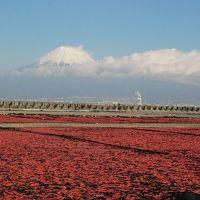 赤く染まる桜えび干しと富士山(静岡)