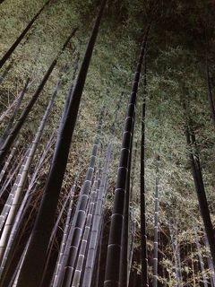 京の週末 2014秋冬 ~廬山寺・青蓮院門跡・終い弘法~