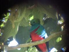 Hot Spot !「最後の楽園」は野鳥の楽園か?コスタリカ到着翌日にはもうケツァールを発見!
