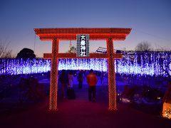 2015 夜景鑑定士が選んだ全国1位・あしかがフラワーパークFLOWER FANTASY~光の花の庭~