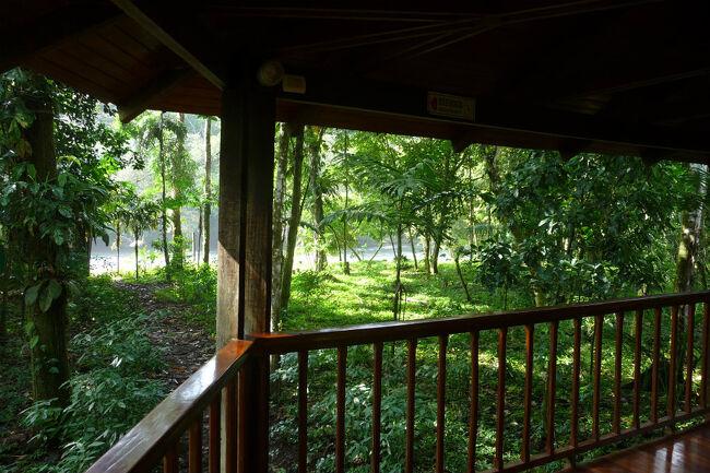 サラピキは未だそれ程は観光化が進んでいない様で地味な感じの処でしたが、宿泊したホテルが予想に反して素晴らしかったので、まずはホテル内をご紹介。熱帯雨林の中に点在するロッジを高床式の回廊でつないでいるユニークな施設です。<br />敷地は広大で全てがジャングルの中に点在していますし、川を挟んだ対岸は完全なる手つかずの大自然です。そのために敷地内や居室の周囲にも多くの野生動物が跋扈しています。<br />通常サファリ(あるいはサファリパーク)はアフリカの乾燥した草原に設定されている自然公園のことですが、此処は熱帯雨林に設定されたサファリの中にあるロッジだと考えられます。<br />
