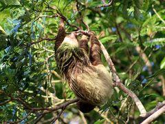 コスタリカ 生物多様性&熱帯林(12/全12): 帰路, 総集編(自然保護区, 熱帯の野生動物)
