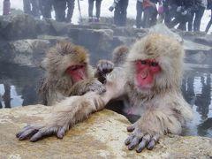 温泉に入っているたくさんのお猿さんを見てきました!
