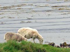2014スコットランド 風と偉人を探しに スカイ島 day3 海岸をドライブ