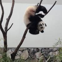 南紀白浜_Nanki Shirahama ジャイアントパンダは世界屈指!近畿を代表するアミューズメントエリア