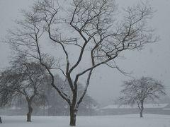 美しい雪景色の軽井沢 冬のバカンス♪ Vol3(第3日目)☆雪の軽井沢プリンススキー場と新雪のショッピングプラザ♪