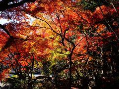 鎌倉(天園ハイキング、建長寺→獅子舞→覚園寺)