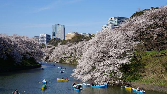 千鳥ヶ淵から上野を散策