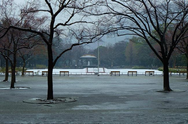 東京に 雪が降る 天気予報 待っていました 雪景色が写せる<br /><br /> 支度して出掛けるが 東京駅では雪の姿なし<br /><br />  有楽町で降りてみれば 小雨。。。<br /><br />日比谷公園<br />http://www.tokyo-park.or.jp/park/format/index037.html