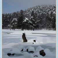 雪と氷の浄土世界&雪に包まれたお堂たち ~毛越寺・浄土庭園&中尊寺~