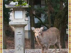 3年ぶりの・・・連れ合いの大阪帰省と、せっかくだから、奈良のガブちゃんに会いに行っちゃおう~! ⑥ 興福寺、ならまち、ちょっぴり東大寺・・・など
