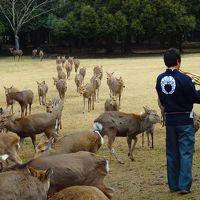 たくさんの鹿が街なかを闊歩するそんな非日常的な風景が不思議に感じられない そんな街奈良で鹿寄せ