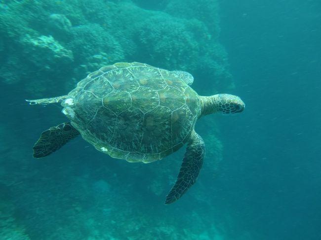 なんだかリゾート感をあんまり感じないから急遽、ホテルアイランドツアーを予約。<br /><br />カビラオ島に行ってシュノーケリングするツアーです。魚はほかの国の方がもっときれいに見れるけど、それよりもウミガメに二回も会えて、すっごく嬉しかったぁv(^_^v)♪