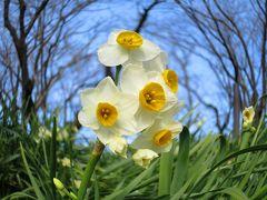 隠れ切支丹(キリシタン)の里に咲く花/マリア地蔵に秘められし想い