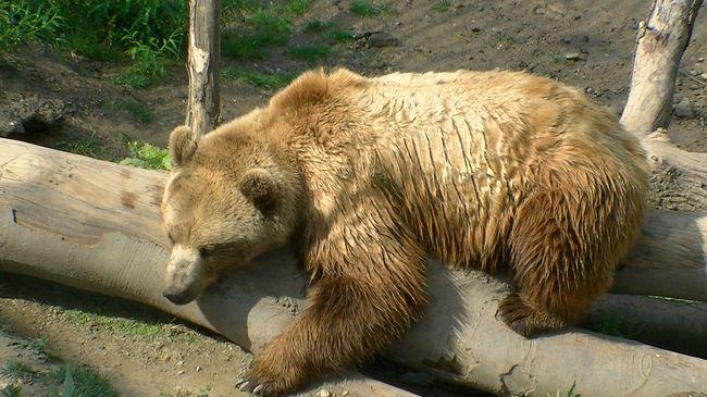 ヨーロッパ 6-(15) アーレ川から熊公園、そしてベルンの時計塔ツィートグロッケ・トゥルムへ・・・