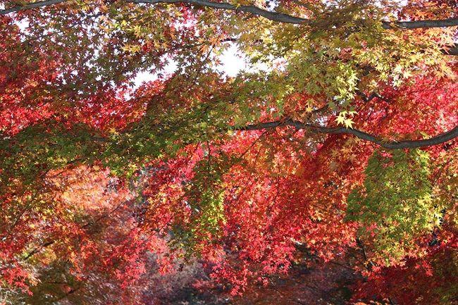 紅葉の季節、神戸森林植物園へ。<br />カフェでカレーとソフトクリームを食べて、園内を散策。<br /><br />その後は近くにある弓削牧場でおいしいチーズを食べた1日♪
